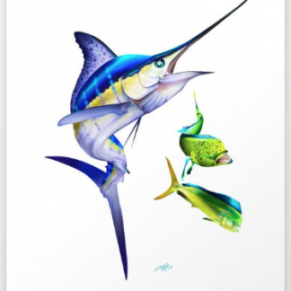 White Marlin, Dolphin Fish