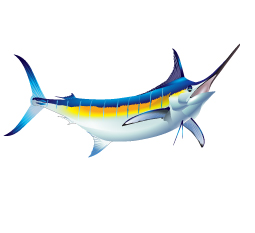 Blue marlin, marlin, billfish, marlin, pelagic, fishing art, sport fishing, big game fish, realistic, painting, fish art, fishing art, sportfishing, sport fishing art