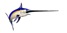 swordfish, broadbill, marlin, billfish, marlin, pelagic, fishing art, sport fishing, big game fish, realistic, painting, fish art, fishing art, sportfishing, sport fishing art