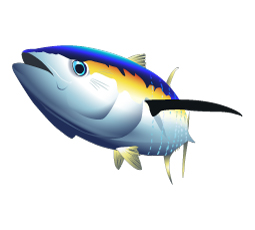tuna, Yellowfin tuna, fish vector